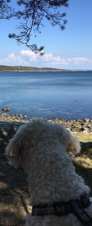 Charlie beundrar utsikten