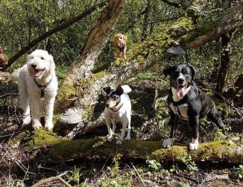 Fyra snyggingar i trädet =)
