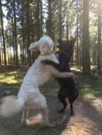 Charlie och härliga Sienna i yster dans.