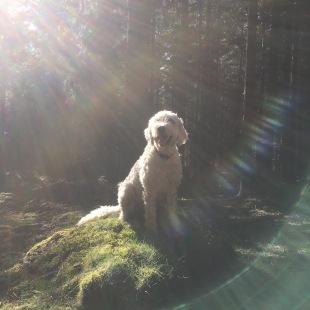 Charlie i magiskt ljus