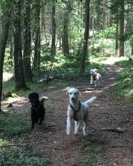 Mitzy och Kiwi, bakom dem kommer Saga
