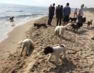 Mingel på stranden