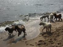 Alla hundarna är så otroligt fina =)