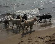 Havet och hundar glittrar i kapp