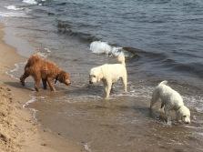 Bailey, Charlie och Saga chillar ett ögonblick