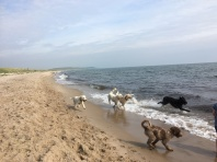 Stranden var fantastiskt vacker, troligtvis inte lika vacker som med doodlarna....