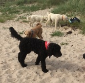De två vita är Charlie och Saga , de andra i bilden är Sagas helbrorsor Albin och Santo