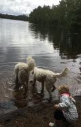 Spännande vid sjön med vovvar son badar tassar.