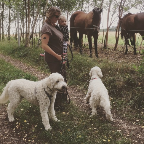 vi tittar på nyfikna fina hästar