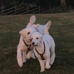 Mitzy får en kärleksfull tackling av Charlie här.