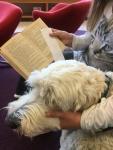 Läshunden Charlie i knät på en av de första eleverna för denna termin. Alla nöjda!