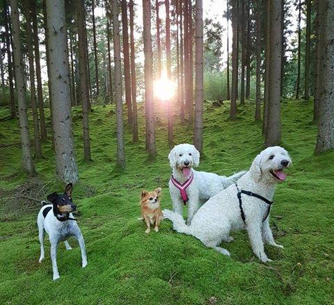 Pedro, Putte, Saga och Charlie poserar i denna vackra skogsbacke.