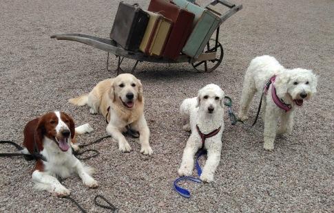 Osse, Backi, Mitzy och Saga är på resa....