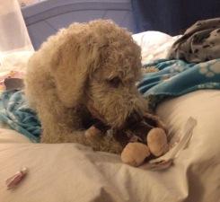 Saga blev så nöja med sina presenter som hon fick öppna när vi kom till hotellet. Charlie fick också ett paket att öppna av Mumla =)