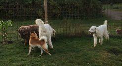 Grabbarna snackar och Saga funderar nog på hur hon kan få lite mera action på tillställningen igen =)