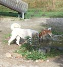 Simba och Charle vid vattenhålet på Hundalandet