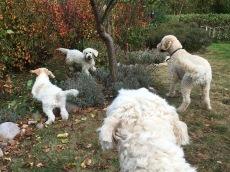 Fluffiga kompisar leker i trädgården