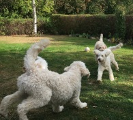 Glada hundar!