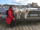 I Ystad, småbåtshamnen