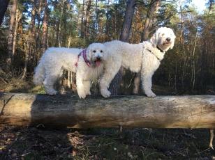 Dogparkour i skogen