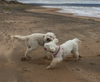 Charlie och Saga leker på stranden.