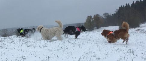 Lek och spring, alla grabbarna gillade snön.