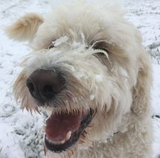 Glada Charlie med sitt charmiga smile, en otrolig glädjespridare. En stjärnhund!