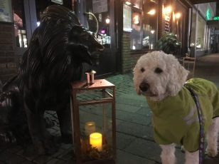 Sagas lejonpolare utanför Harrys.