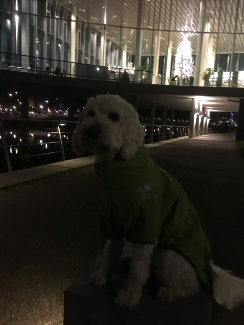 Dogparkour i Halmstad by night. Halmstads vackra bibliotek i bakgrunden.
