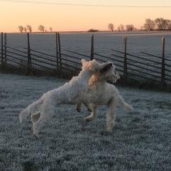 Syskonlek i trädgården en vacker vintermorgon. Charlie och Saga