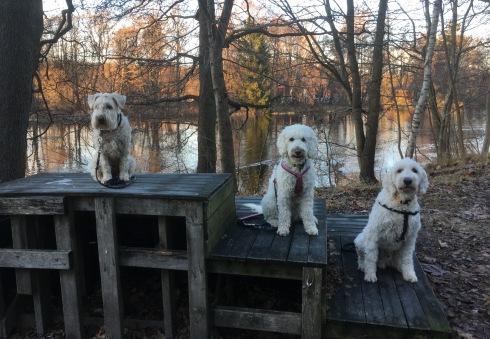 Fina hundar poserar vid Nissan en fin vinterdag. Freja, Saga och Charlie
