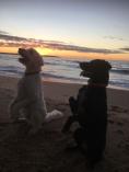 Vackra underbara hundar