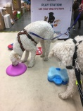 Mitzy och Charlie provar på olika spel. My Dog 2017
