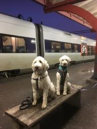 Strax på tåget hem! Trötta och nöjda efter en heldag på My Dog 2017