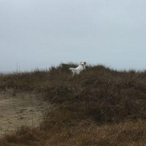 Saga i full fart i sök efter Linnea i sanddynerna