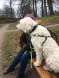 Paus under fin promenad i parken. Vårdhunden Charlie