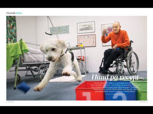 Vårdhunden Charlie i Härliga Hund Hunden vår bästa medicin