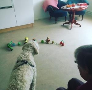 Från jobbet, en undran kom upp om vilken leksak Charlie skulle välja.... Så vi testade , så klart. Det blev bollen i mitten, den har ett skojigt ljud.