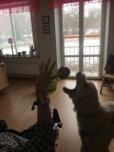 Actionbild! Kul bild med bollen i luften när Charlie jobbar.