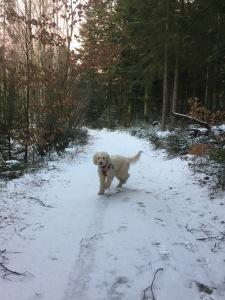 Saga och jag på skogspromenad