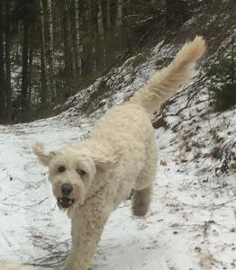 Charlie glad i skogen