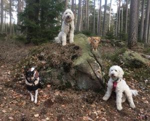 I skogen med kompisarna Pedro och Putte