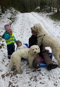 I skogen med hundar, barnbarn och pulkor. Blir inte mycket bättre än så!