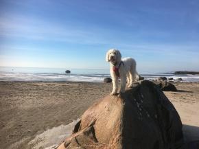 Vårdhundselev har ledig dag