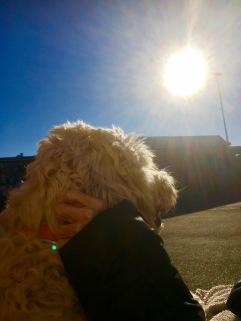 Skön stund på en bänk i solen och lite kli bakom örat.