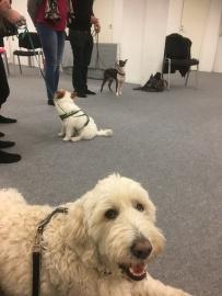 Här har vi ställt upp för nästa övning. Inkallning mellan hundar! Det gick toppen för hela gänget.