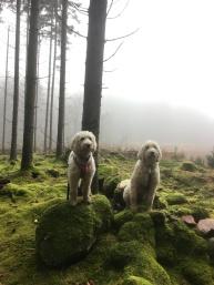 Charlie och Saga i vacker trollskog