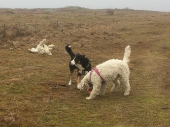 Charlie rullar sig, Gip spanar och Saga snor bollen.