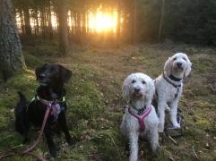 Solnedgång bakom träden