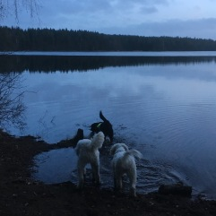 Vinterbadare i kvällsljus efter långrunda